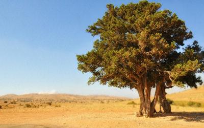 Partez au Liban promouvoir la Francophonie !